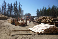 Implementation of forest fire salvage program in Pelican Narrows, Saskatchewan